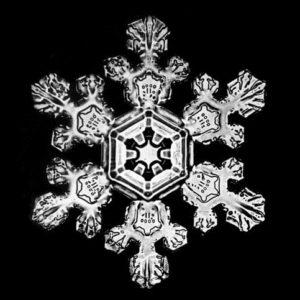 snowander-snowflake_483x483